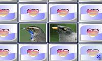 Мир птиц в картинках