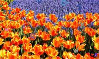Найди буквы на цветочном поле