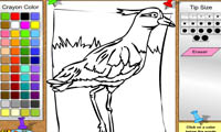 Раскраска птицы