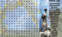 В поисках породы собак
