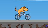 Катание животных на велосипеде
